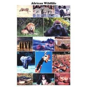African Wild Life   Inspirational Poster  24 x 36