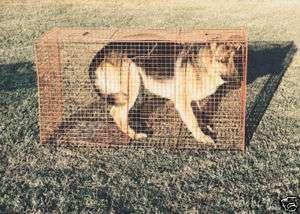 Fox, Medium Dog Live Trap 42 x 17 x 24