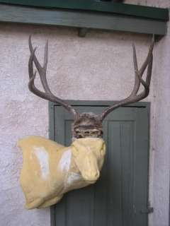 Perfect 4x4 mule deer rack on a solid skull plate, excellent color