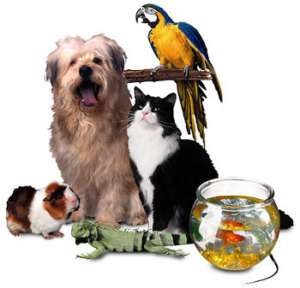 pet supplies business plan Tall drink of water designs and sells elevated pet feeders in a number of styles to pet care professionals, government agencies, and the public edit this pet supplies business plan business plan to fit your business.
