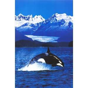 Orca Killer Whale   Inspirational Posters   24 x 36