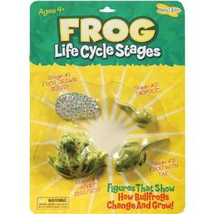 9 Pack INSECT LORE FROG LIFE CYCLE STAGES: Everything Else
